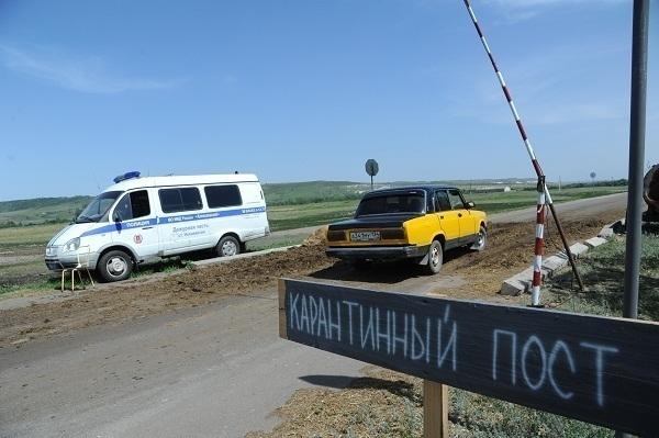 Вирус чумы свиней снова обнаружили в Волгоградской области