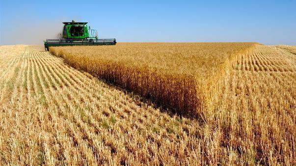 Волгоградские крестьяне распродали большую часть своего урожая