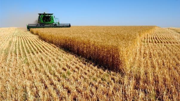 Под Волгоградом конкурсный управляющий похитил у предприятия-банкрота 1200 тонн зерна
