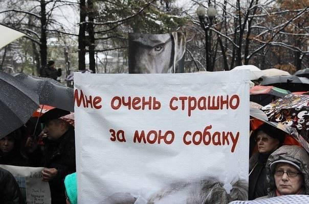 На севере Волгограда орудуют догхантеры