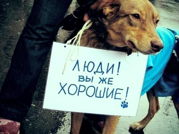 Появилось первое интервью сдевушкой-живодеркой изХабаровска