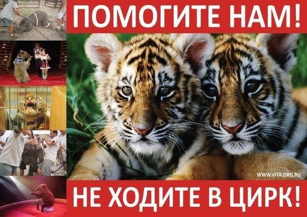 В Волгограде зоозащитники проведут акцию «За цирк без животных»