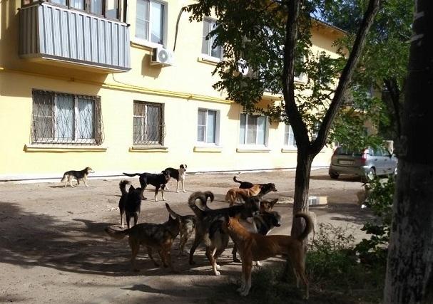 60 бездомных собак кошмарят жителей поселка Максима Горького
