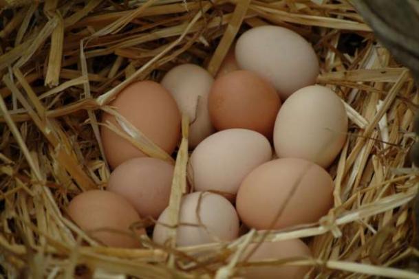 Волгоградские крестьяне сильны молоком и яйцами