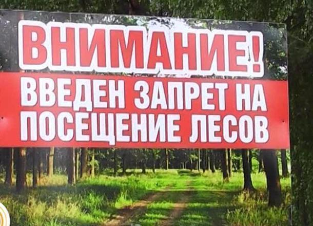 ВВолгоградской области введено ограничение напосещение лесов