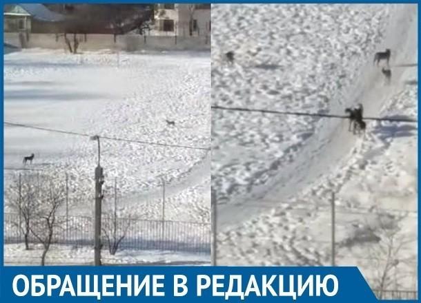 Собаки-агрессоры атаковали поселок Ангарский