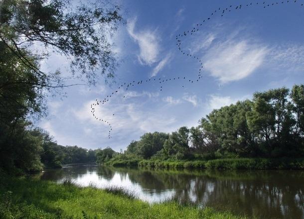 8 тысяч деревьев высадят по всей Волгоградской области до конца октября