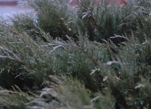 Обрушившийся на Волгоград ледяной дождь сняли на видео