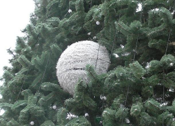 Экологическую елочку в природном парке Волгограда на Новый год выберут школьники