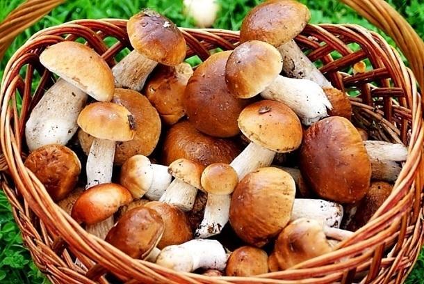 13 человек отравились грибами в Волгоградской области