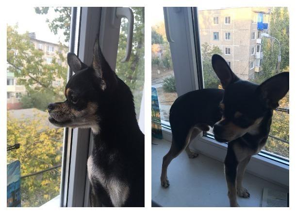 Актриса Волгоградского молодежного театра ищет дом для необычной собаки
