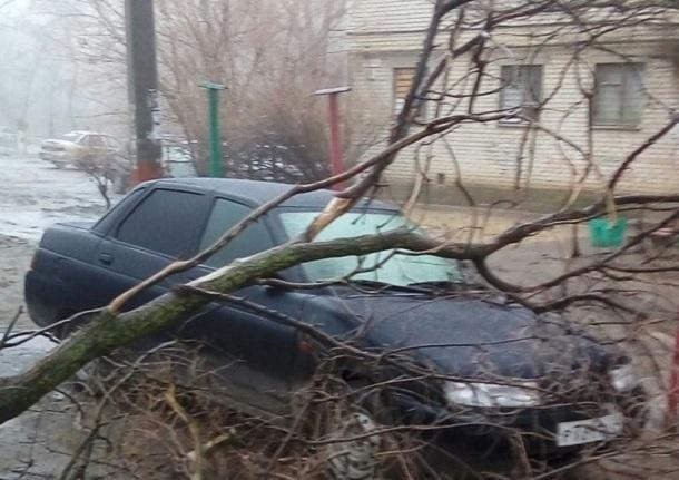 ВВолгограде дерево рухнуло на легковую машину