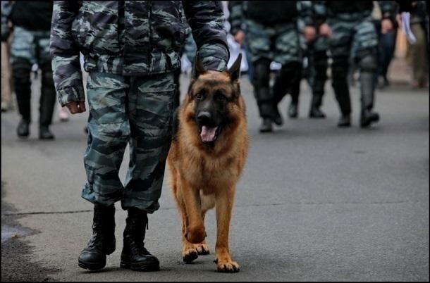 ВВолгограде 9мая будут дежурить 3500 полицейских