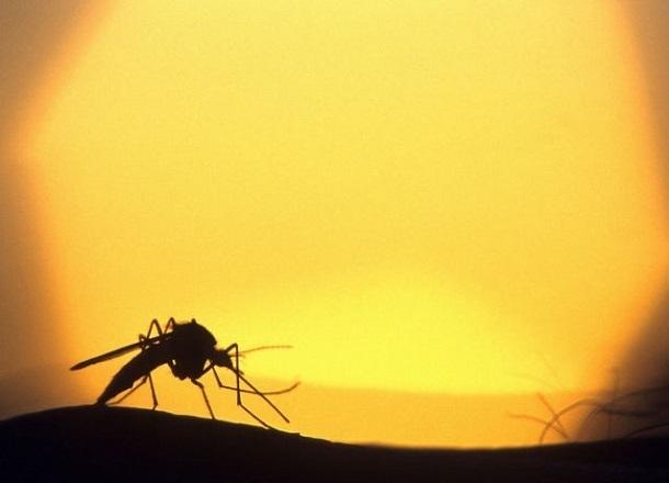 Как туристу спастись от палящего солнца и комаров в Волгограде