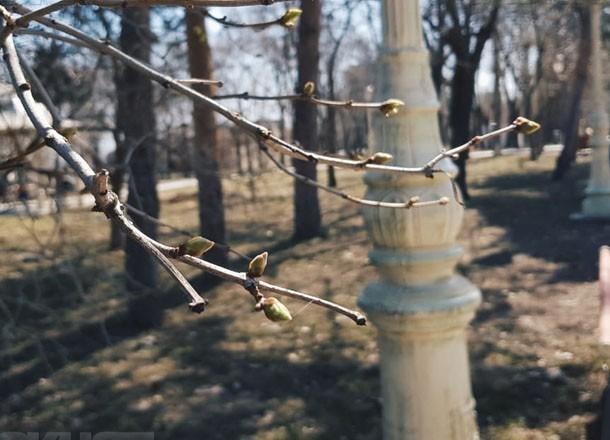 Дожди с грозами и жуткий ветер пришли в Волгоградскую область