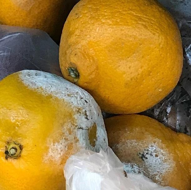 Новый вид цитрусовых был выведен в волгоградских магазинах