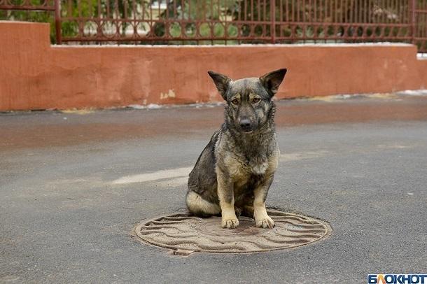 Сто бездомных собак взяли к себе домой волгоградцы