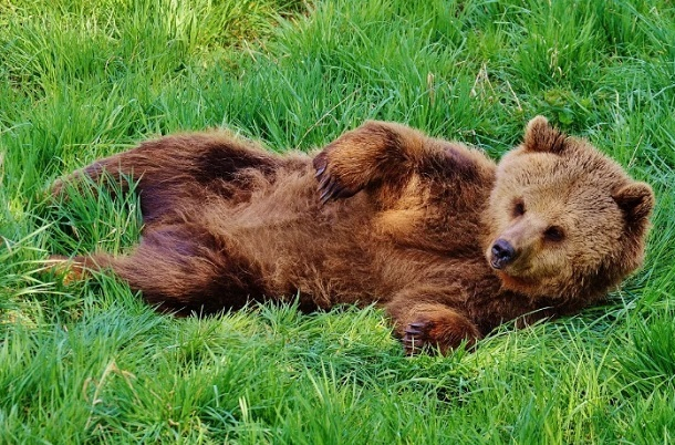 Бегающую вокруг села медведицу хотят спасти от расстрела волгоградские зоозащитники