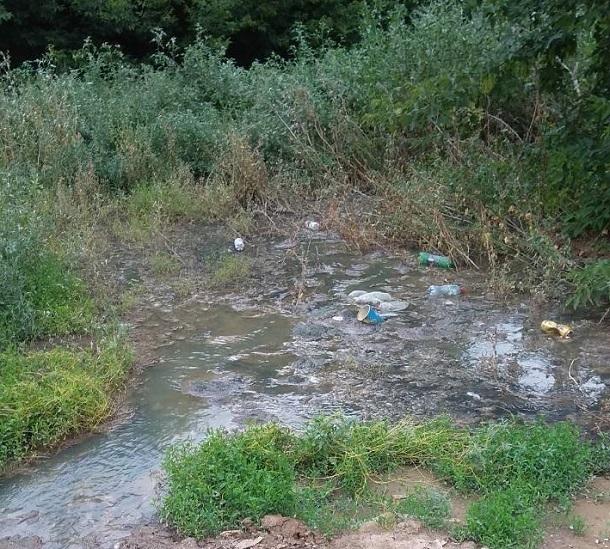 Тело новорожденного обнаружено в заброшенном волгоградском парке