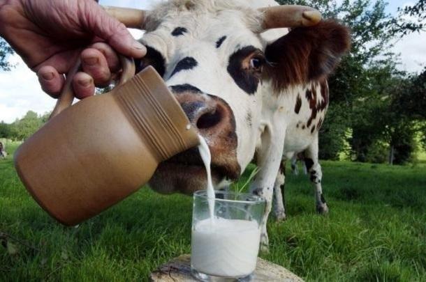 Волгоградское молоко оказалось одним из самых дорогих по России