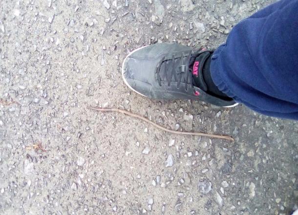 Жителей Волгограда напугали гигантские черви