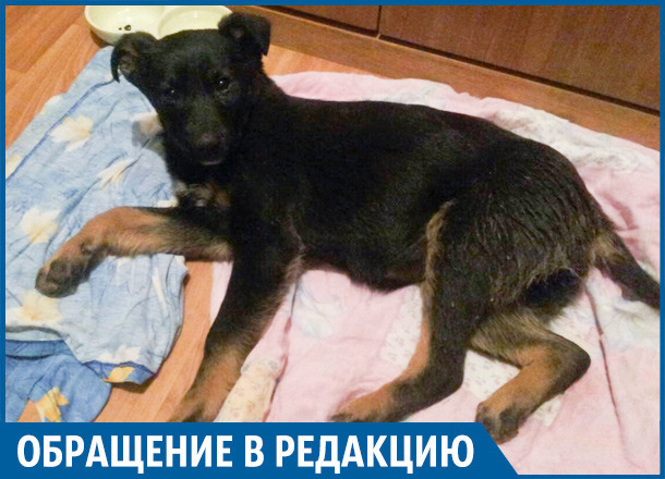 Волгоградка обвиняет врачей в смерти 4-месячного щеночка