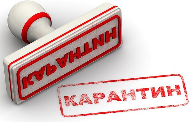 В двух районах Волгограда снят карантин по бешенству