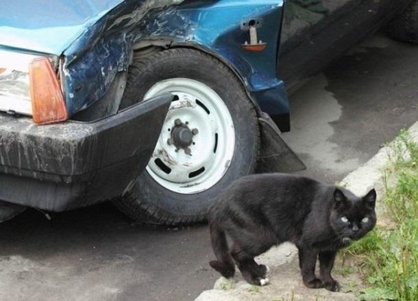Если черный кот дорогу перейдет: «десятка» съехала в кювет и врезалась в фонарный столб на трассе в Волгоградской области