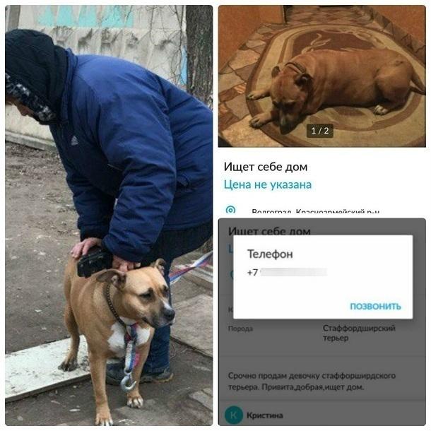 Породистую собаку вышвырнули на улицу из-за неудачных попыток продать ее в Волгограде