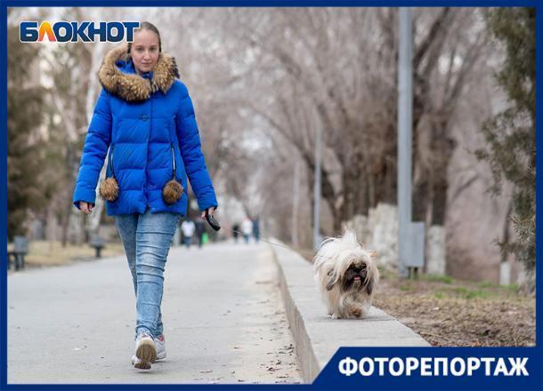 Похожи ли собаки на своих хозяев, выяснил фотограф из Волгограда
