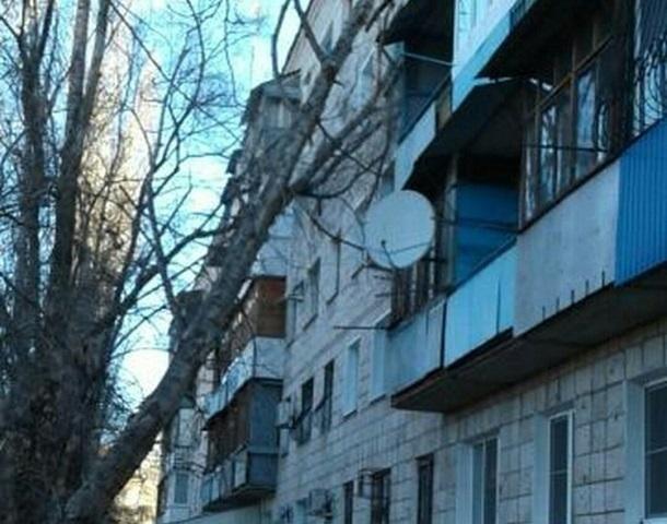 На юге Волгограда сильный ветер свалил дерево на жилой дом