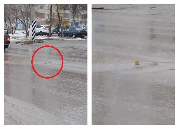 «Святой источник» ударил из проезжей части на севере Волгограда