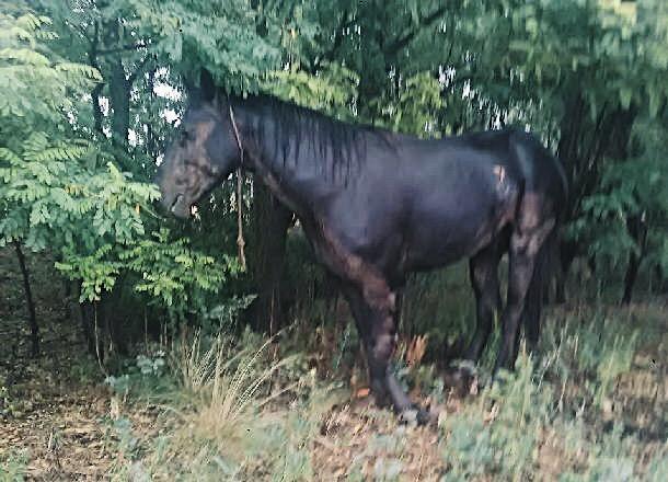 Волгоградцы пытаются спасти покалеченного в ДТП молодого коня