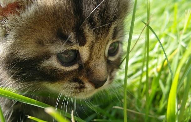 Расчленение котенка под Волгоградом сняли на видео и выложили в Сеть