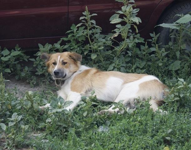 Банда догхантеров убивает домашних собак на севере Волгограда