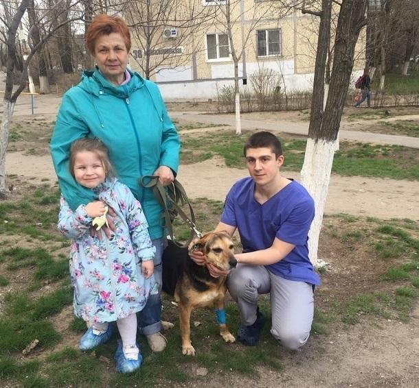Впервые вместо усыпления в Волгограде чипировали бездомную собаку