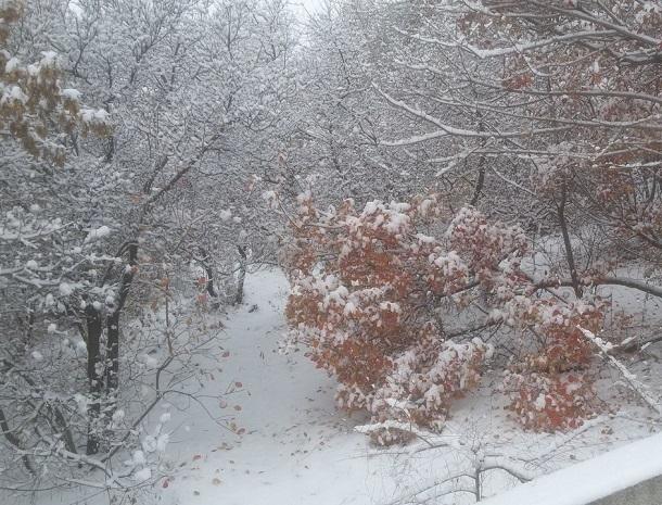 Снежный Волгоград ждут «ноль», туман и мокрые осадки