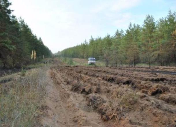 Леса Волгограда защищают от пожаров патрулированием