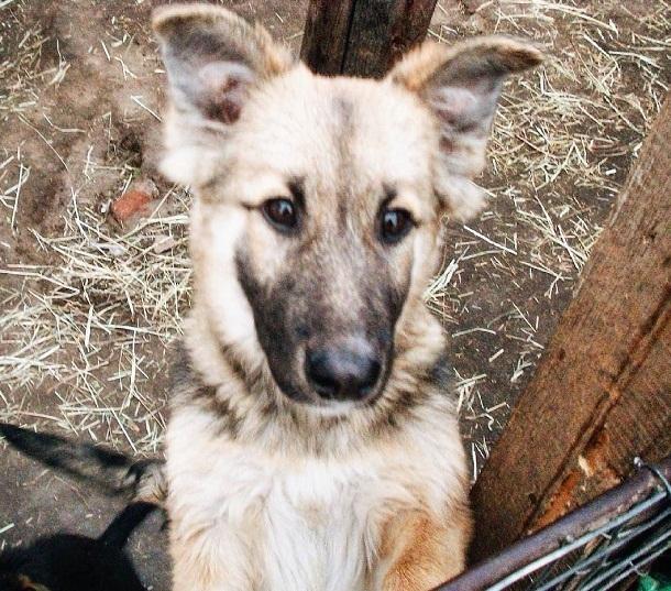ВВолгограде благотворительный забег накормит бездомных животных
