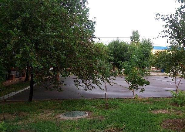 Администрация Волгограда добралась до вырубки очередного парка