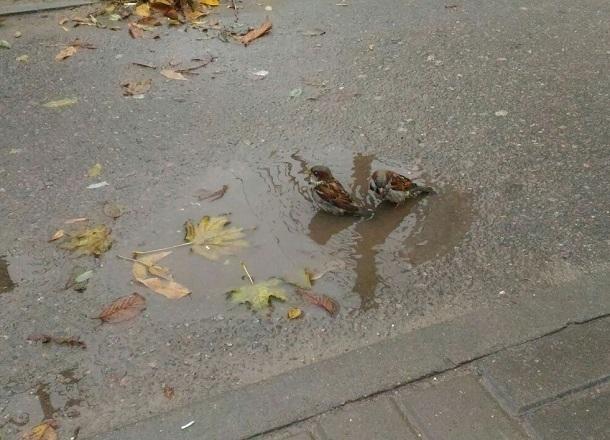 Суббота встретила жителей Волгограда ясной и теплой погодой