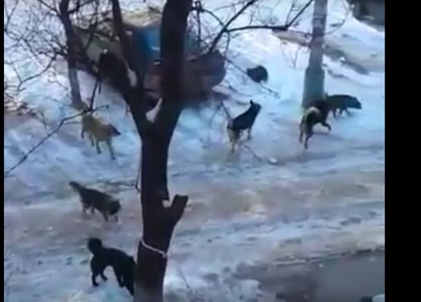 Волгоградцы вовсю обсуждают видео утреннего квеста с бездомными собаками