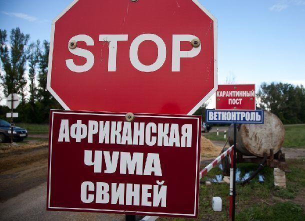 Удиких кабанов вСветлоярском районе обнаружили АЧС
