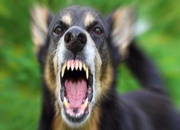 ВВолгоградской области полицейскому довелось стрелять вразъяренного пса