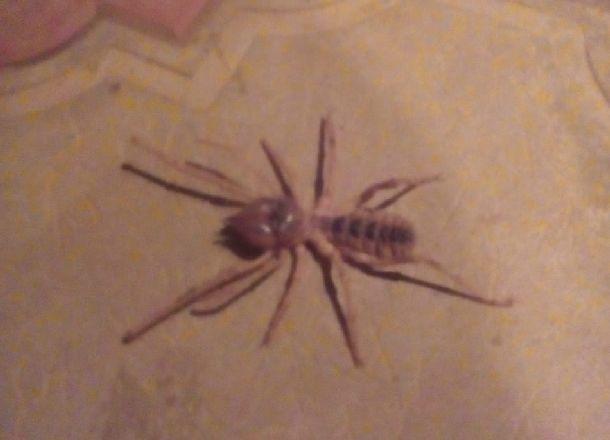 Ветряные скорпионы оккупировали дома жителей Волгоградской области
