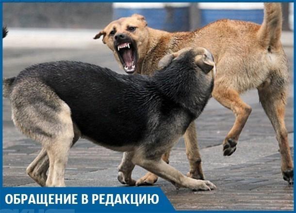 На юге Волгограда бродячие псы напали на пенсионерку, порвав ей ногу
