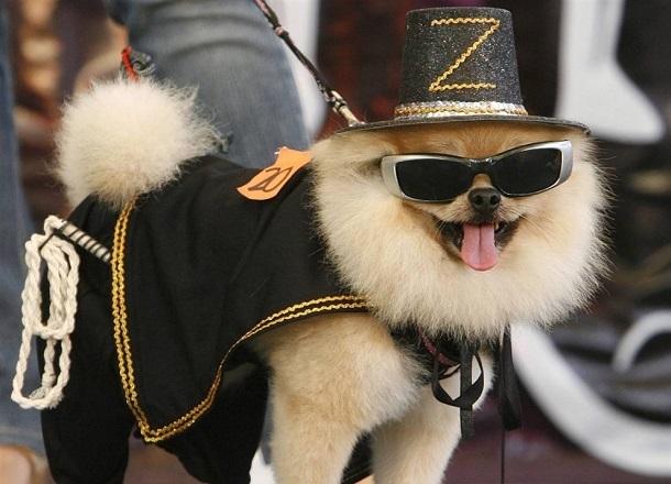 Модный собачий показ пройдет в Комсомольском саду Волгограда