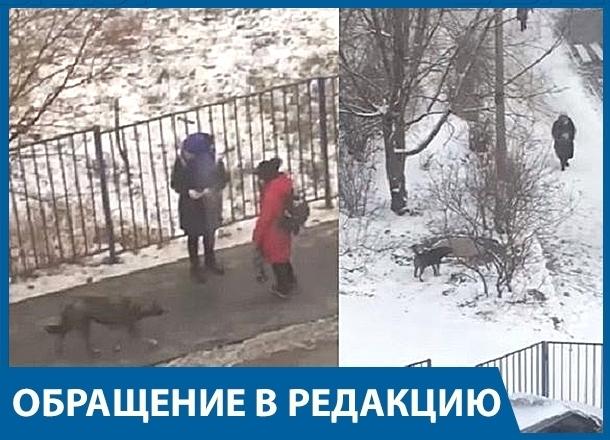 Бродячая собака нападает на детей возле школы в Центральном районе Волгограда