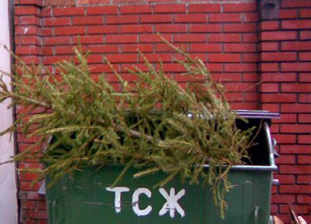 Волгоградцы открыли сезон выбрасывания елок