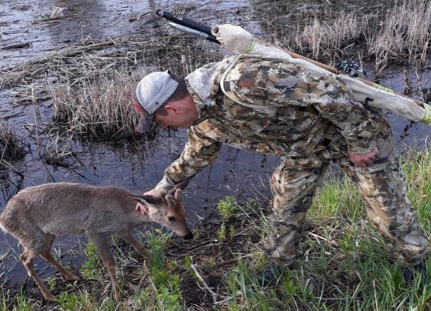 Маленький олененок Бэмби «затолкал» рыбака в воду на острове Сарпинский